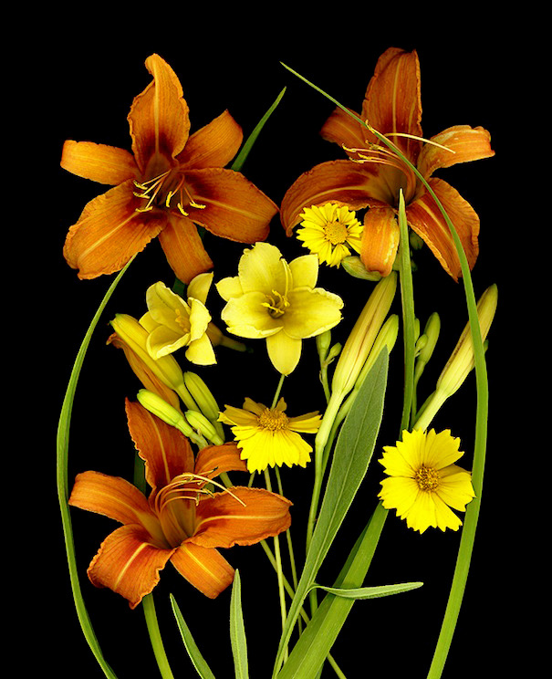 LILIES AND COREOPSIS