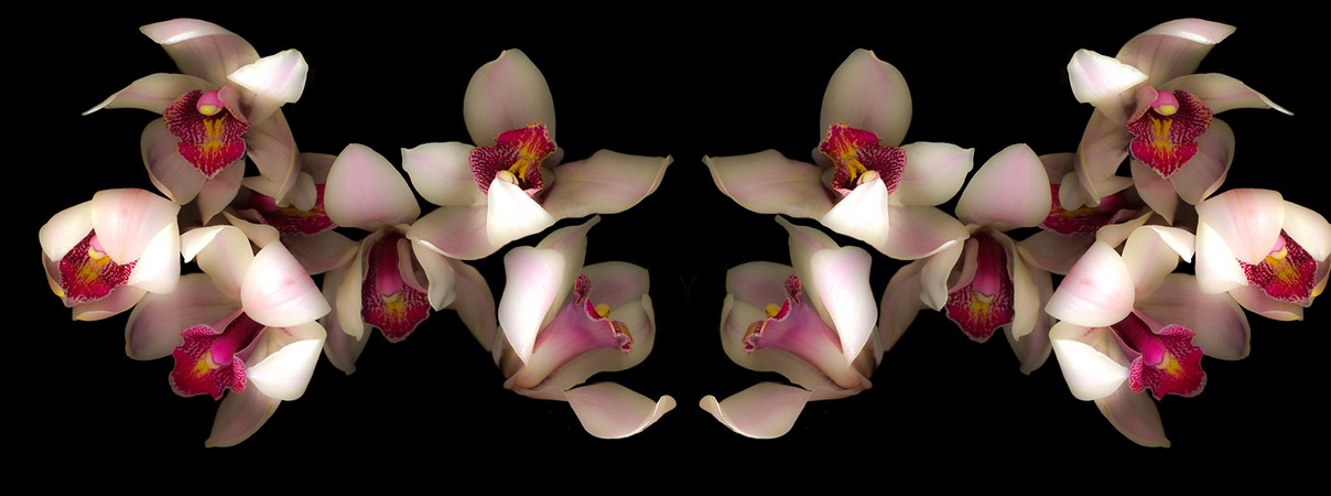 Pink and Fuscis Orchids vertical