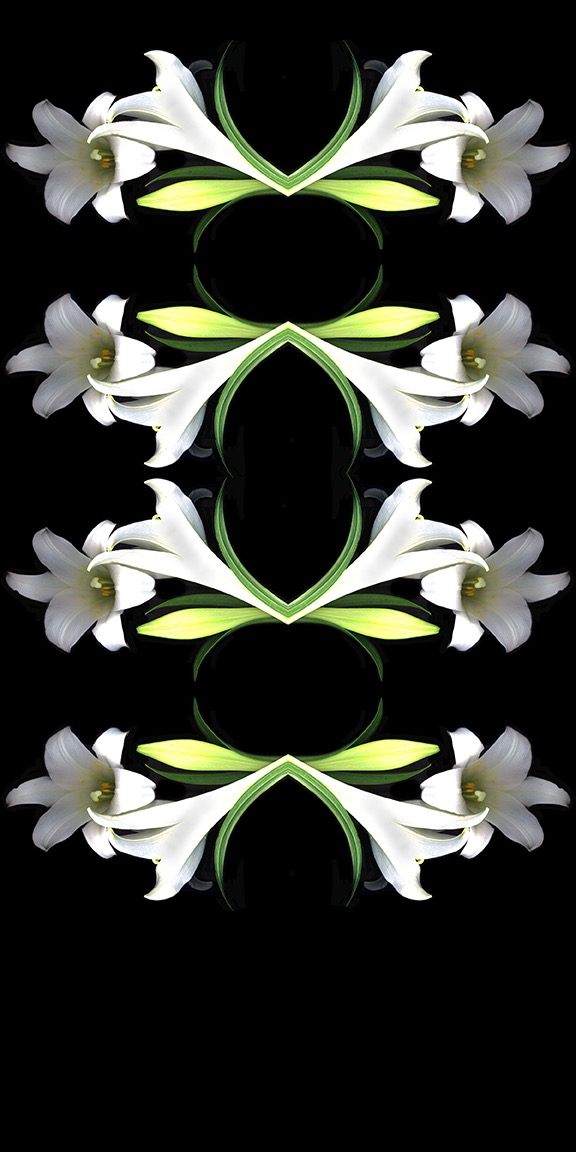White Lily Pattern copy