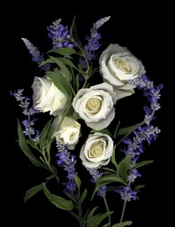 WHITE ROSES AND SALVIA