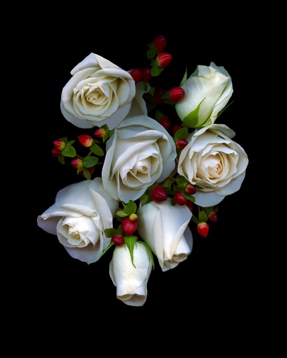 White Roses Red Berries copy